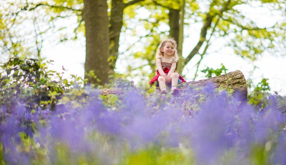 Beautiful Norfolk Woodland Bluebells - Norfolk Family Photography